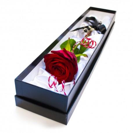 Single Red Rose 2017